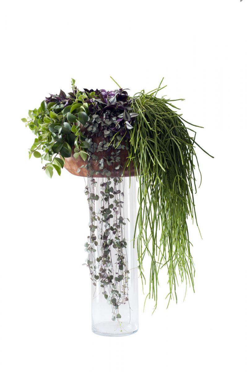 FloraNews.com - Hangplanten zijn Woonplanten van de maand september